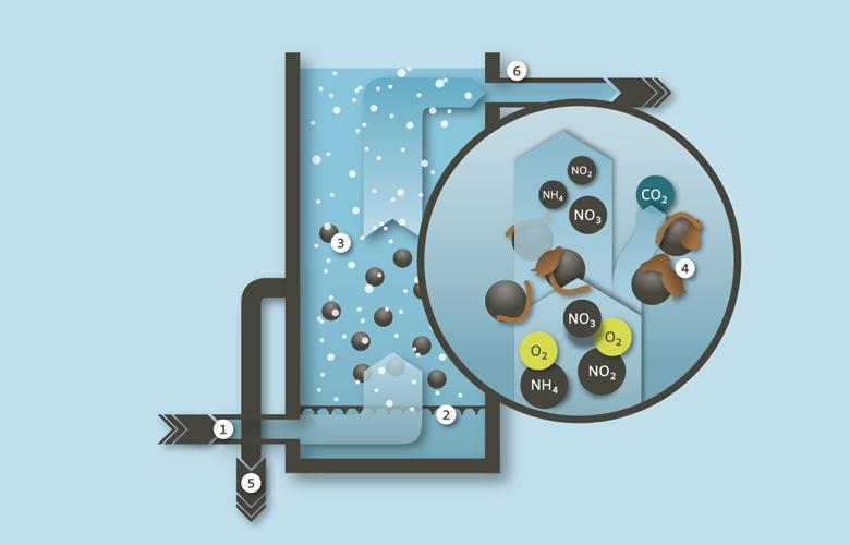 Grafische Darstellung Nitrifikation Abwasserreinigungsanlage Limeco (Dietikon, Limmattal)