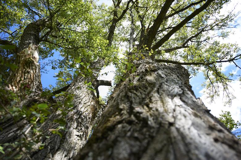 Bioabfallsammlung schont die Umwelt
